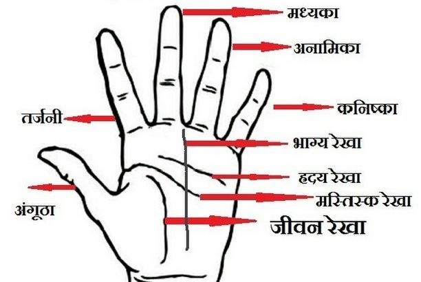 hand line horoscope in hindi