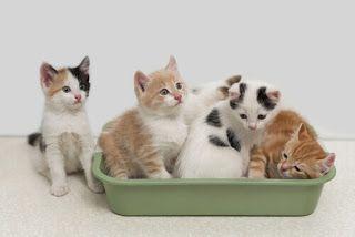 The food doggers: Il gatto non usa la lettiera? 8 domande da porsi