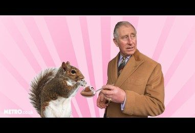 Prince Charles plans to use Nutella as bait to sterilise grey squirrels