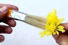 Espera a que sequen. Almacena el recipiente en un lugar caliente y seco. Si usas un recipiente abierto, mantenlo en una habitación con buena circulación de aire. Verifica después de unos días, usando un mondadientes para examinar los pétalos y probar su sequedad. El gel de sílice es el medio más rápido de secar flores; la mayoría de las flores tardan solo 2 a 4 días en secar por completo, mientras que las gruesas pueden tardar hasta una semana.[34] Cuando el gel de sílice se vuelve de color…