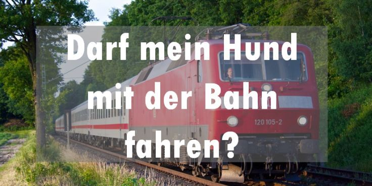 Darf mein Hund mit der Bahn fahren? Wenn eine Zugfahrt ansteht und dich dein Hund begleiten soll stellt sich die Frage, ob das möglich ist? Braucht er eine Fahrkarte? Was musst du sonst beachten? Besteht Maulkorbpflicht? Hier erfährst du alles wichtige zum Thema Hund und der deutschen Bahn.    darfmeinhund.de    Fotos: (c) Profilbesitzer | flickr
