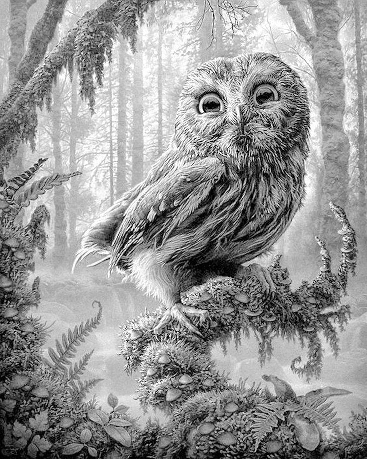 Beautiful Owl In Beautiful Forrest!!!