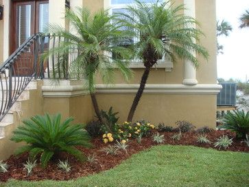 Palm garden depot the smaller palm is a sago palm and the Home depot palm beach gardens