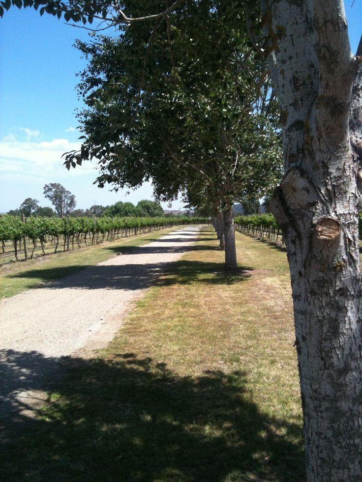 Wyndham Estate Hunter Valley, NSW
