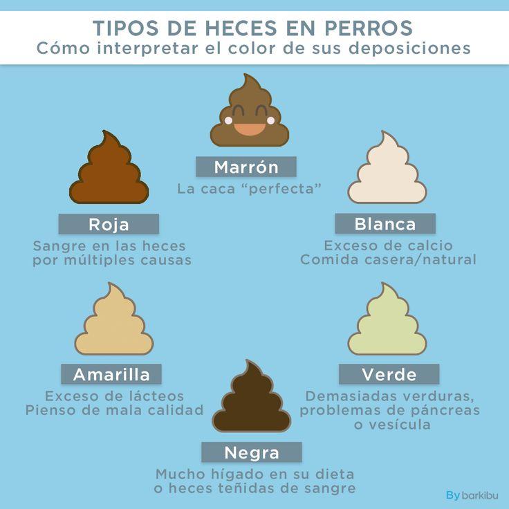 Resultado de imagen para HECES DE PERRO