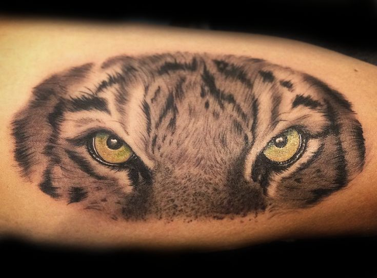 Eye of the Tiger; Tiger Tattoo Meaning