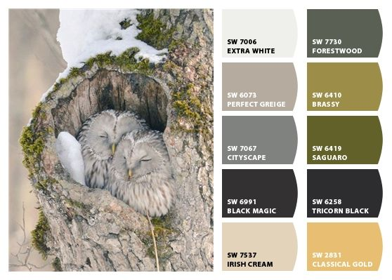 How To Pick A Color Palette For Your Entire Home Colour