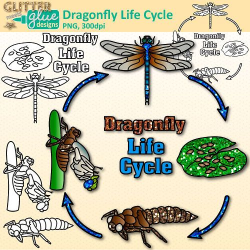 DRAGONFLY LIFE CYCLE: Are you a science teacher looking for more fun and engaging clipart to excite your students? Looking for a fun way to explore a dragonfly's life cycle with your budding science students? Want to get your kids more motivated in learning about life sciences? Check out this awesome set of glittery science clipart. #stem