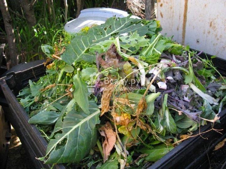Повышаем плодородность почвы после сбора урожая