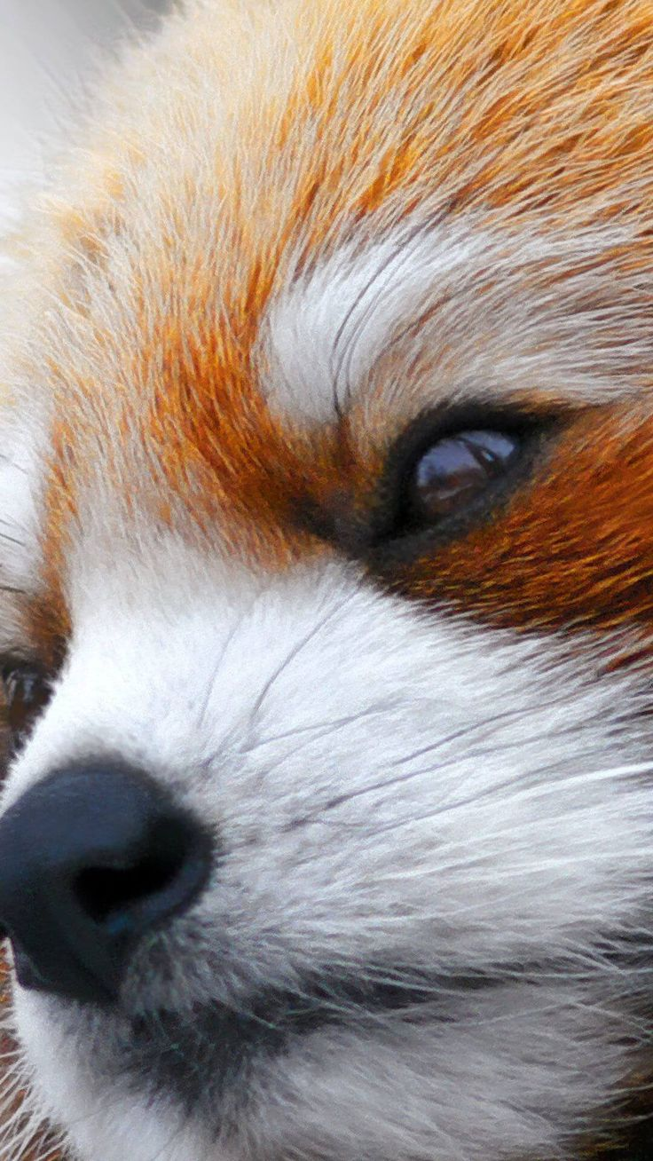 17 best images about animal wallpaper for iphone on