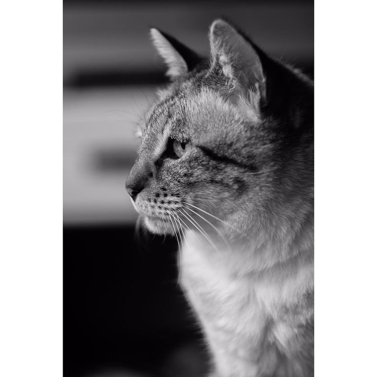 kitty 8.0 - - - #instagood #blackandwhite #canon�� #canon #dslr #city #light #shotbyme #dutch #netherlands #photography #photo #visualsoflife #shotzdelight #instagood #leagueoflenses #lensbible #jwvisuals #theimaged #shotzdelight #gramheist #visualambassadors #gramslayers #exploretocreate #ig_humanplus #heatercentral #thelensbible #globalhitman http://tipsrazzi.com/ipost/1507470816002249426/?code=BTrnLhhFRLS