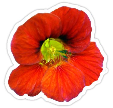 Red Flower with Lime Green Center Sticker by StickerNuts