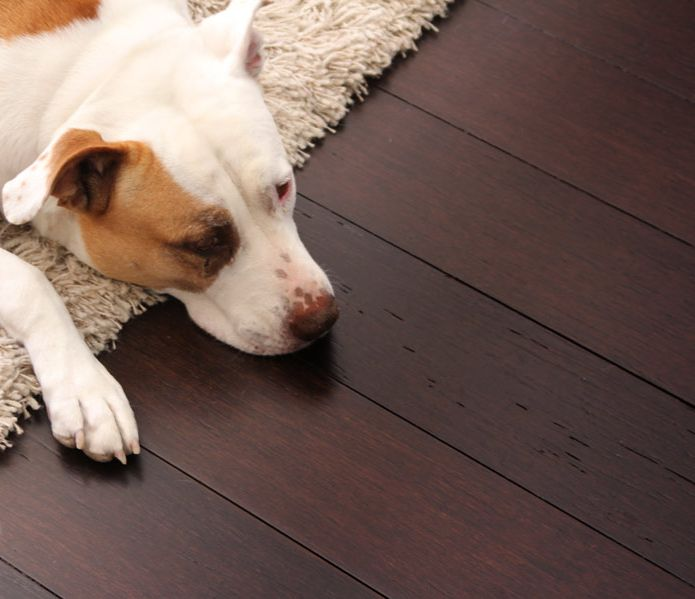 33 best pet friendly flooring images on pinterest java for Dog friendly flooring ideas