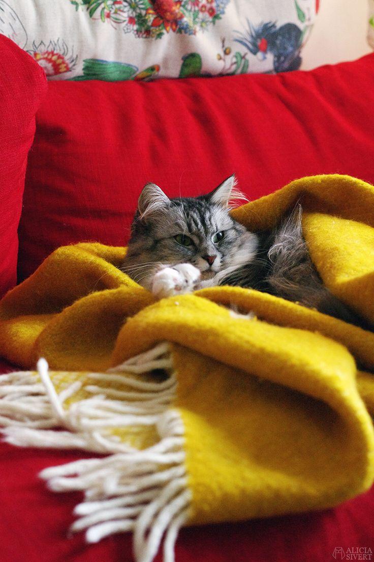 Katten Tofslan, foto av Alicia Sivertsson.
