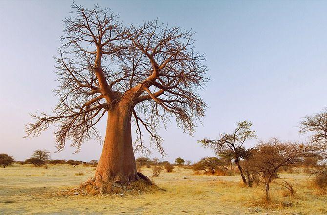 Dobrodružství v jihoafrické přírodě - National Geographic