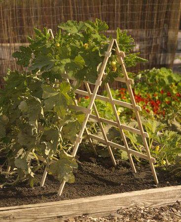 Álomszép ötletek kertészkedéshez, megérdemlik a figyelmet ezek a szépségek! - Bidista.com - A TippLista!