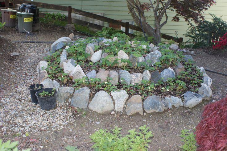 raised bed rock borders the strawberry garden Rock