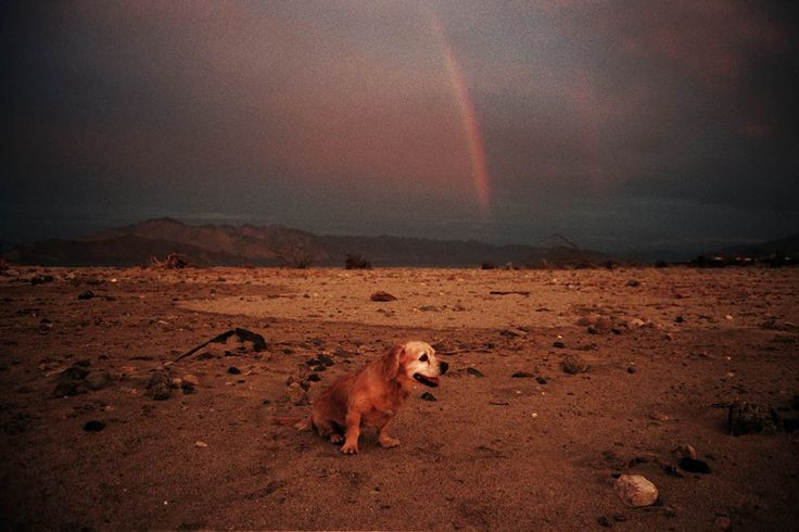 ESP – Mar de Perros Que Ladran Desiertos : Angelica Escoto (México)