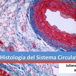 Histología del Sistema Circulatorio Juliana Zapata MV, MSc   SISTEMA CIRCULATORIO Corazón Venas Arterias Capilares Vasos Linfáticos Circulación mayor Circ. http://slidehot.com/resources/histologia-del-sistema-circulatorio-2015-1.56260/