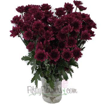 Burgundy Purple Micro Pom Cushion Flower Wedding Flowers