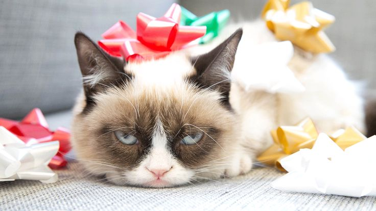 Have yourself a very gloomy GIFmas with Grumpy Cat. Tardar Sauce spreads Christmas grouchiness one GIF at a time.