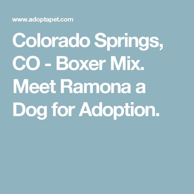 Colorado Springs, CO Boxer Mix. Meet Ramona a Dog for