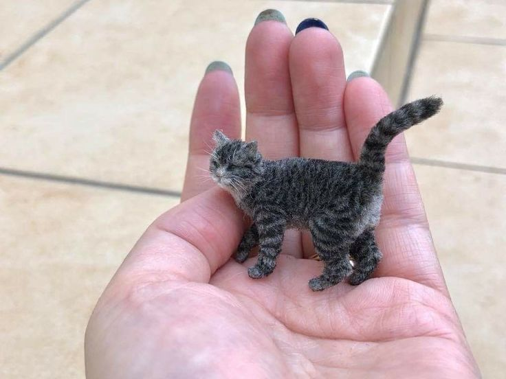 Mr Peebles The Smallest Cat In The World Small Cat Cats Dinosaur Stuffed Animal