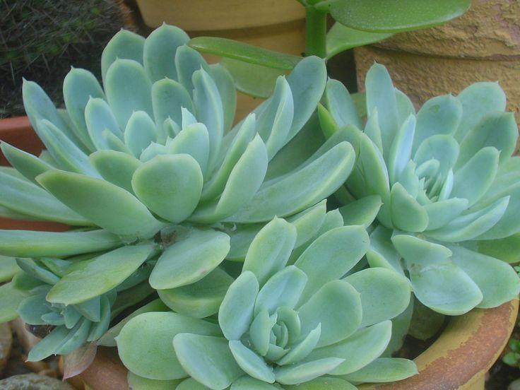 17 best images about plantas on pinterest verano - Plantas de interior resistentes ...