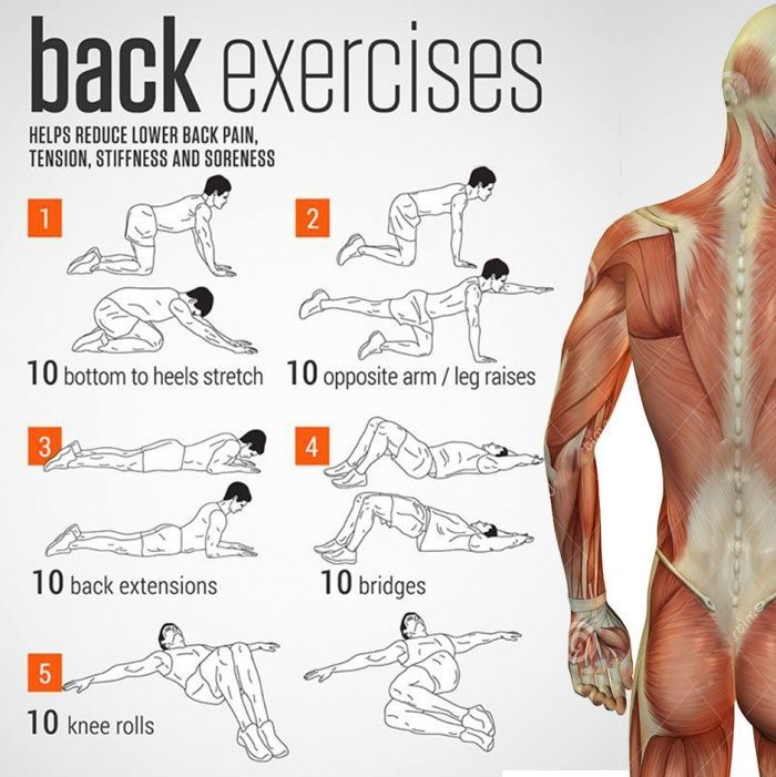 Back Exercises Charts - Health Helps Reduce Lower Back Pain Sore - Yeah We Workout !