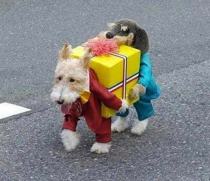 HaHaHa!  This is an amazing costume for a dog!
