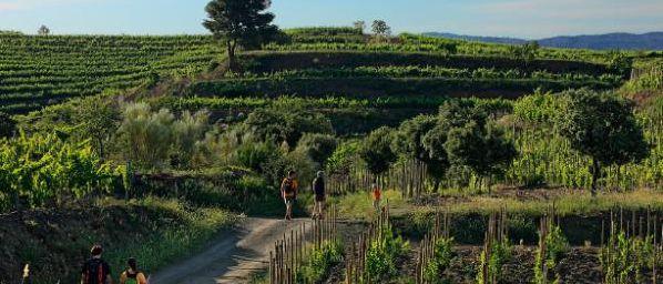 Twee parels in het noorden van Spanje: Priorato en Somontano. Proef het landschap in het glas tijdens deze wijnwandelreis.  Meer informatie: http://www.snp.nl/reis/spanje/priorat_en_somontano_wijnwandelreis