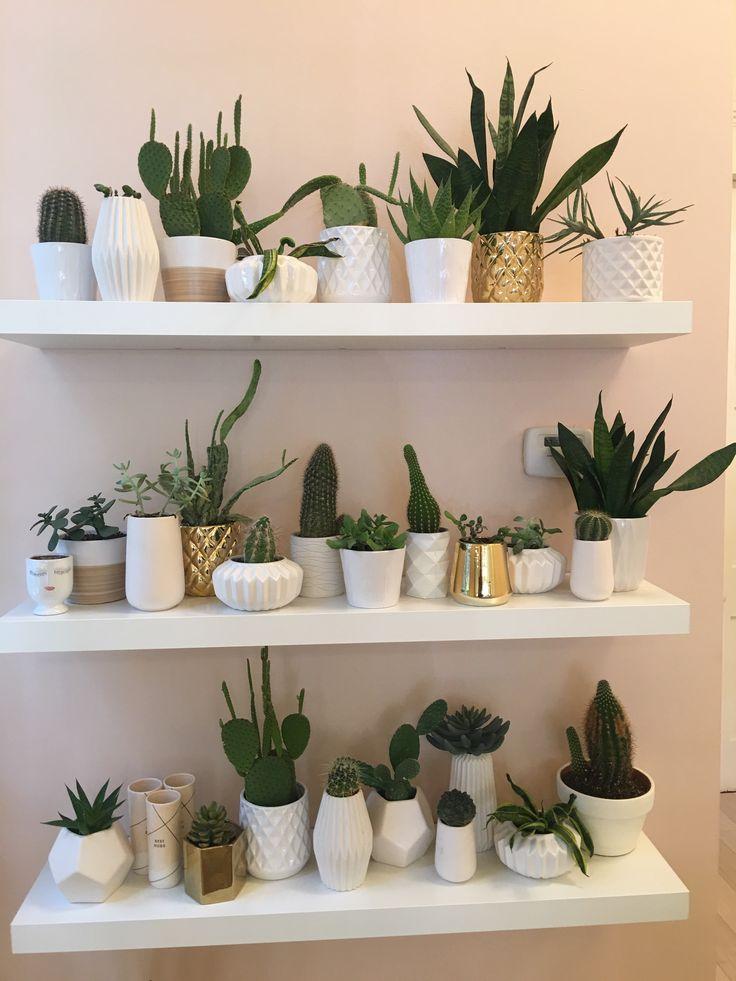 @followingsunshine_ on instagram  #wallgoals #goals #cactus #succulents #love #green #diy