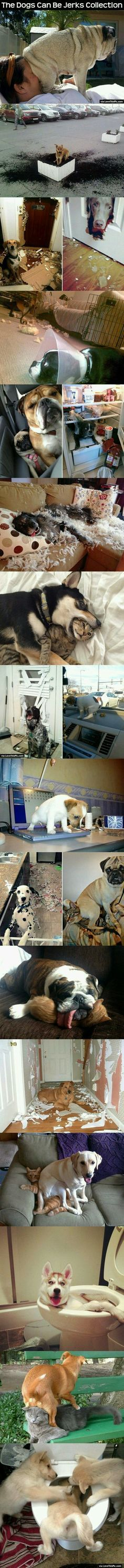 Pets in trouble