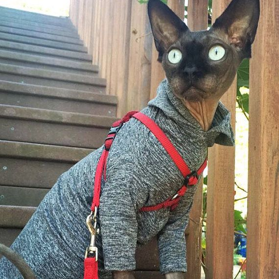 Safe Pet Sun Protection Heathered Hoodie cat Clothes Long Sleeved SunScreen outdoors dog shirt or Sphynx Cat Clothes Chinese Crested SPF 50 by SimplySphynx