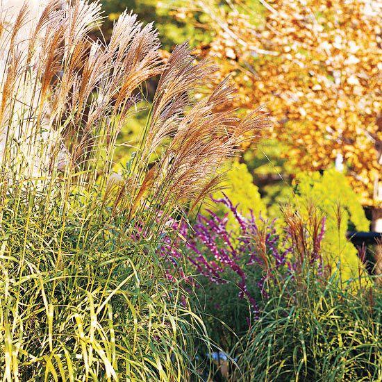 Foliage Favorite: Zebragrass