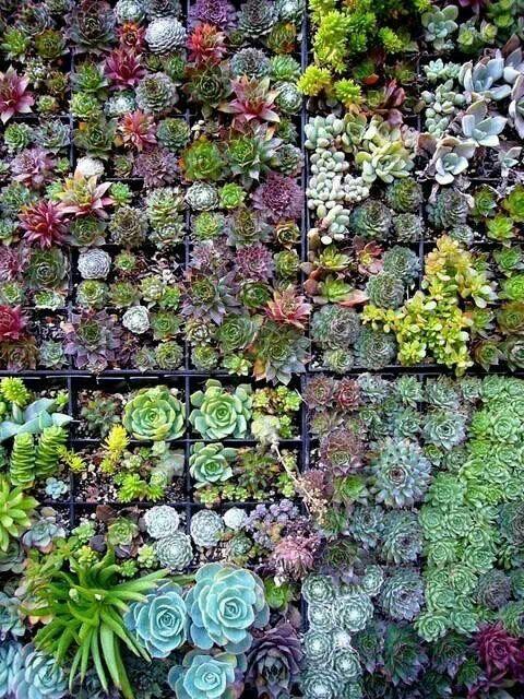 Jardin Vertical Suculentas.