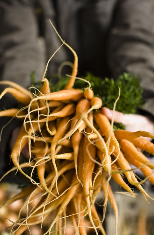Fresh carrots from Farmers Market in the Cotswolds!