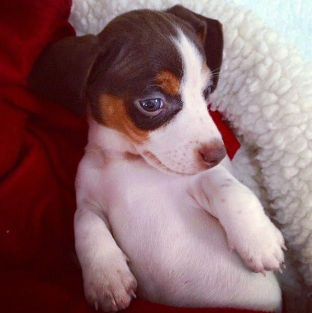 The Vigilant Daschund Pup Personality Daschundofinstagram