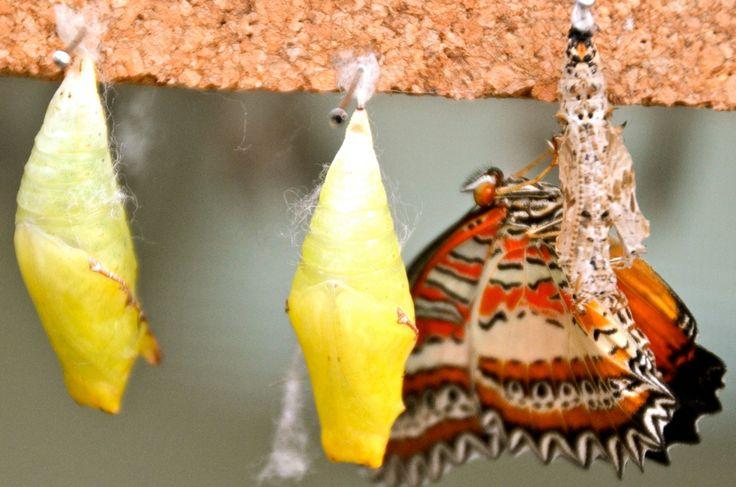 Een vlinder die net uit zijn pop gekropen is...eerst nog in de kreukels en nu mooi...tijd om uit te vliegen! #Benalmadena