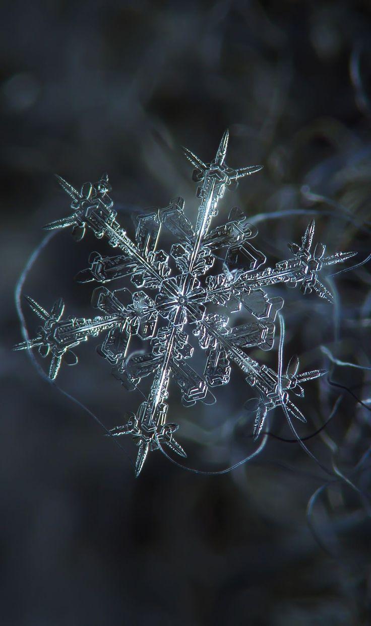 Starlight Snowflake Fascinating macro photo
