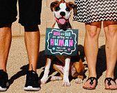 Perro para imprimir / Cat aviso del embarazo - conseguirme la humana / que nos una foto humano Prop - descarga Digital / pizarra - Pet - JPEG