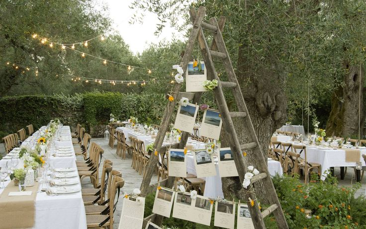 Wedding between the olive trees. Mariage au milieu des oliviers.
