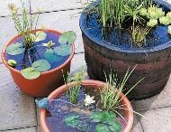 Outdoor water garden