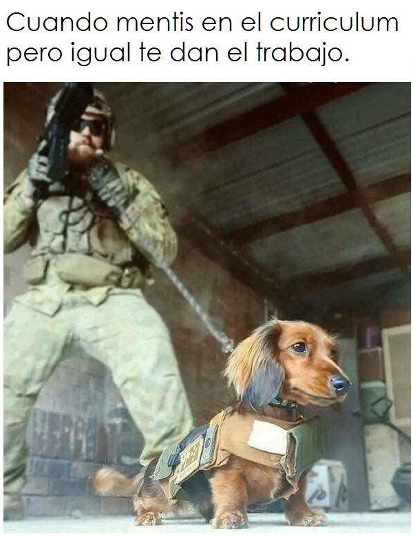 Meme Memes Humor Funny Andromedacomputer Funny Dachshund Dog Memes Wiener Dog