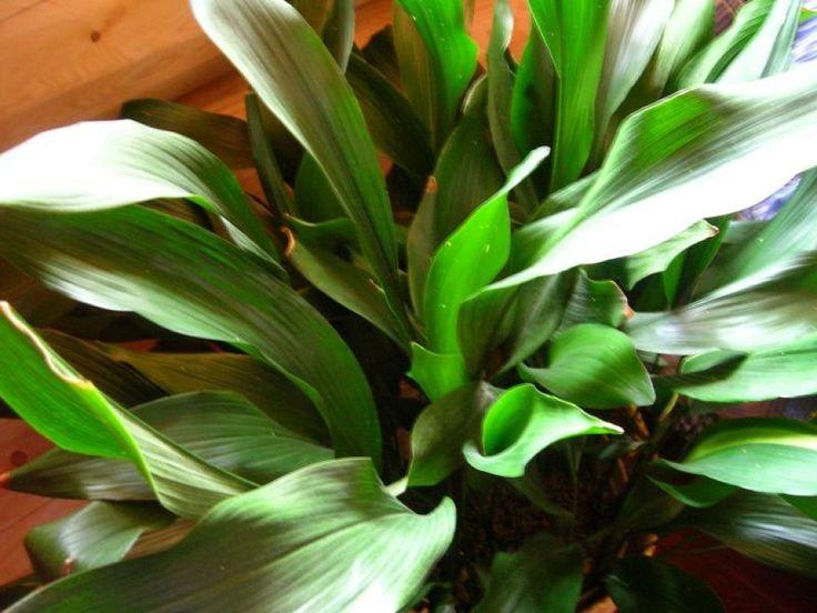Las 25 mejores ideas sobre plantas de interior resistentes for Plantas de interior fotos y nombres