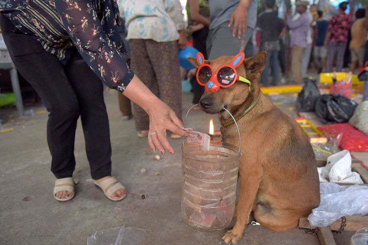 "A Chinese Cambodian woman offers money to a dog ""begging"" at a temple during the start of the Lunar New Year, the Year of the Dog, in Kandal, Cambodia, on February 16, 2018."