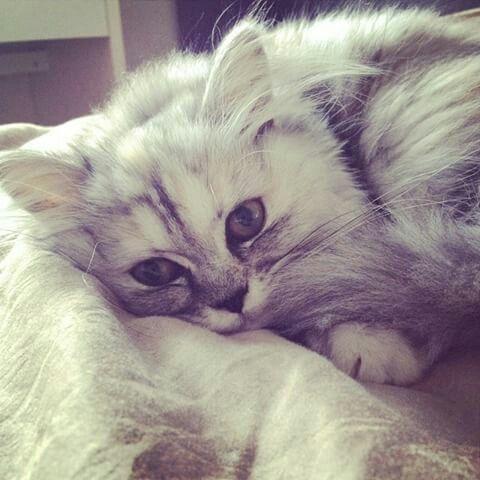 Mitaine le chat d'emma verde❤❤