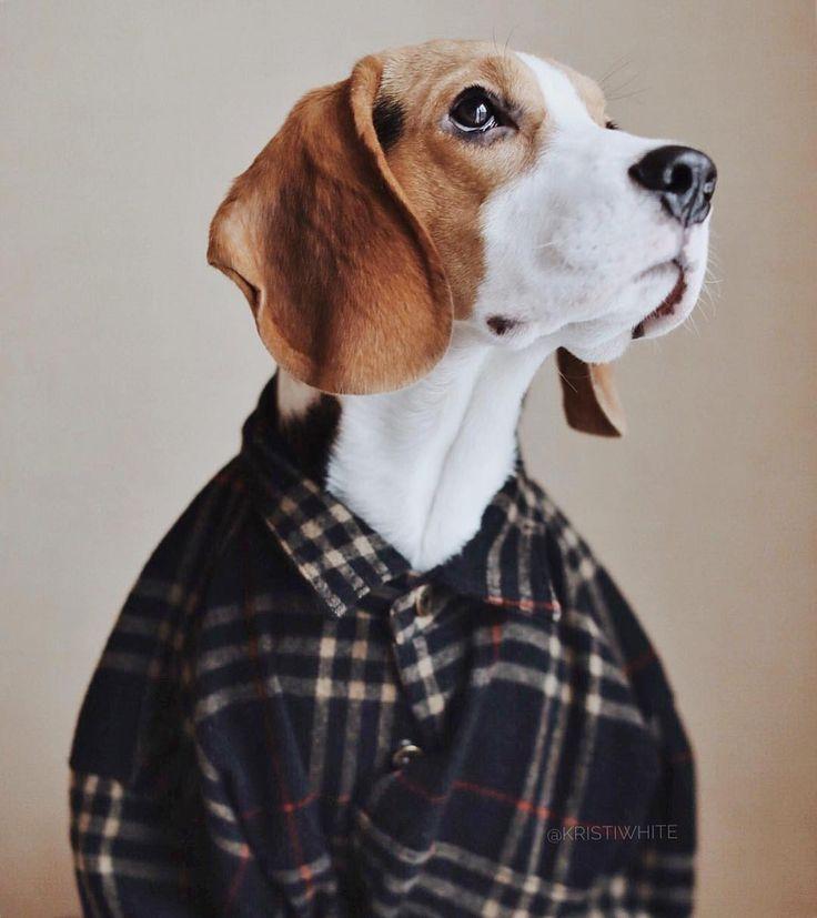 KRISTY WHITE (@kristiwhite) • Фото и видео в Instagram #beagle #beagles #beaglesofinstagram #beaglelove #justbeagles #beaglemania #beaglelife #ilovemydog #puppyface #инстаграмзверят #WeeklyFluff #dogsofinstagram #houndsbazaar #topdogphoto #bestwoof #dogs_of_world #doglove #dogsofinstaworld #instapet #puppyoftheday #бигль #mydogiscutiest #aplacetolovedog #ohmydog #beagleloveit #worldofcutepets #ilove_simplebeyond #houndandlife #AnimalAddicts