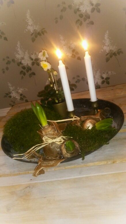 Adventsarrangemnang med mossa,  hyacinter,  julros, helleborus niger och ljus.