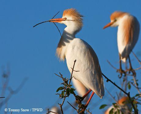 114 Best Texas Birding Amp Fun Things Images On Pinterest